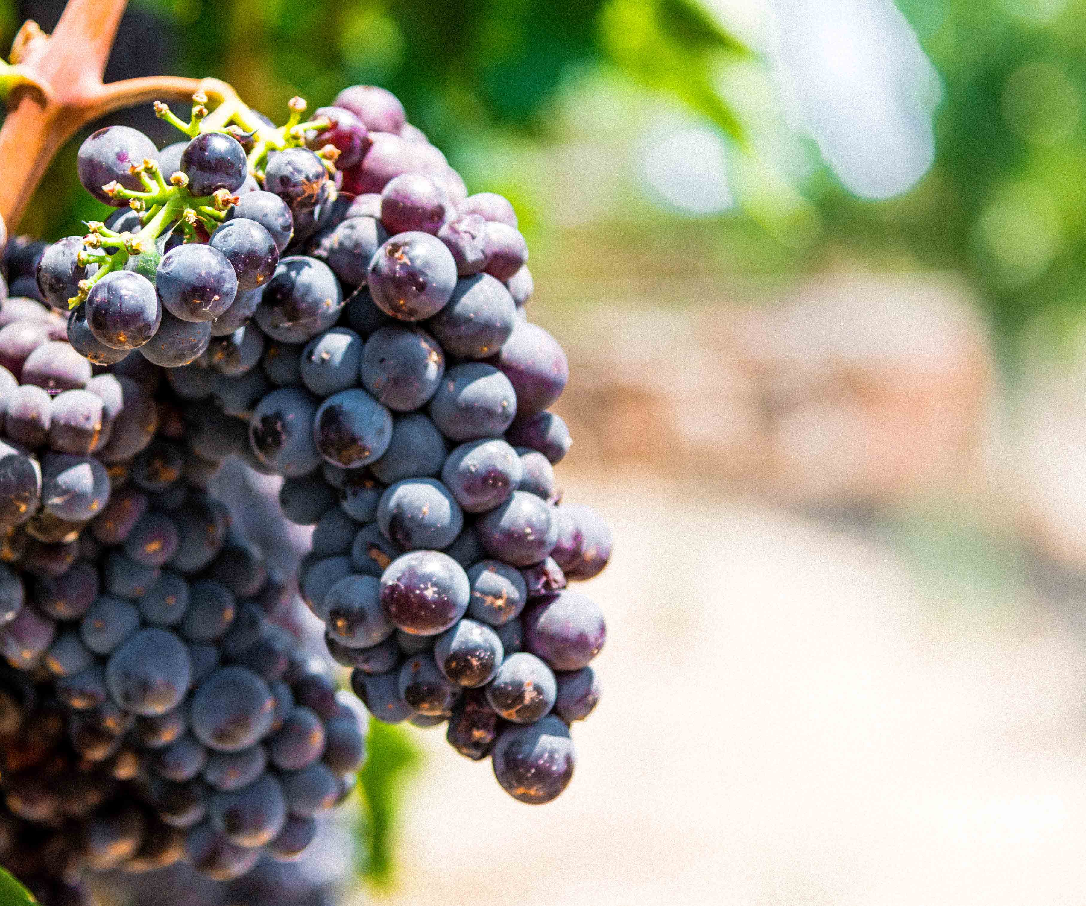 Skin Aging, Wrinkles & Dry Skin: Solved with Grapes
